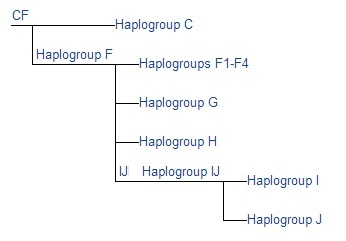Semitic Haplogroup CF G H I J